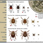 Permethrin and Lyme Disease